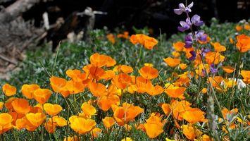 Бесплатные фото цветочки, полевые, лепестки, стебли, трава