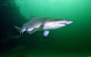 Обои акула, плавники, хвост, жабры, пасть, зубы, рыбки