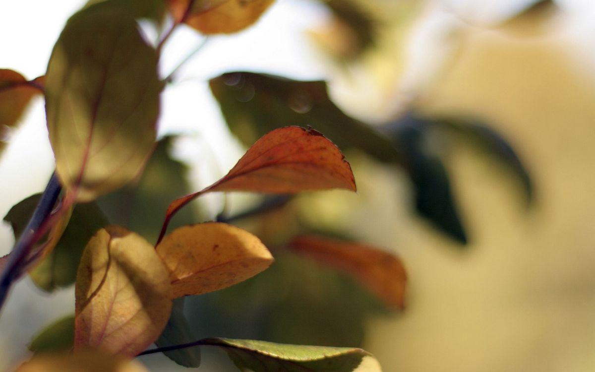 Фото бесплатно дерево, ветви, листья, прожилки, фон мутный, природа