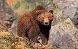Бесплатные фото медведь,морда,лапы,шерсть,мокрая,камни,земля