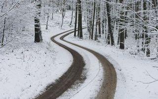 Бесплатные фото зима,лес,деревья,иней,снег,дорога,следы
