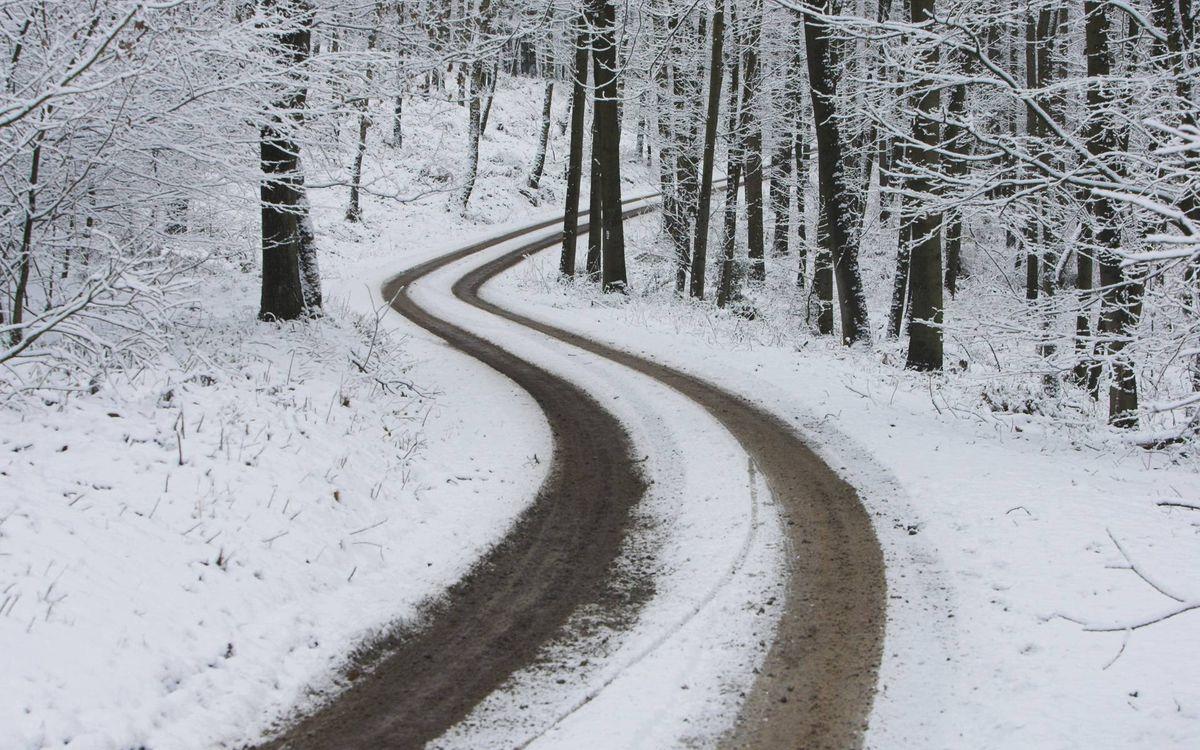 Фото бесплатно зима, лес, деревья, иней, снег, дорога, следы, пейзажи