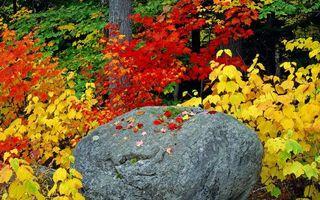 Бесплатные фото осень,камень,валун,деревья,кустарник,листва,разноцветная