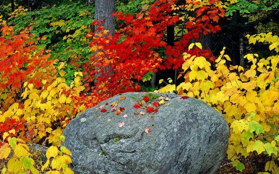 Фото бесплатно осень, камень, валун