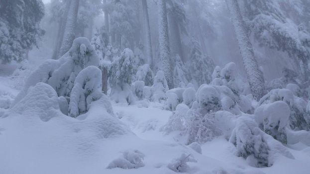 Фото бесплатно сугробы, темный лес, снегопад