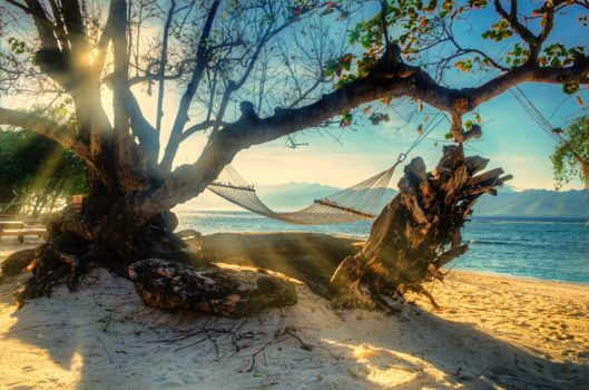 Photo free sea, beach, tree