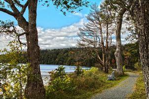 Бесплатные фото парк, озеро, дорога, деревья, пейзаж