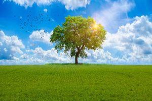 Фото бесплатно поле, дерево, птицы