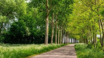 Обои Южная Голландия, Нидерланды, деревья, дорога, проселочная дорога