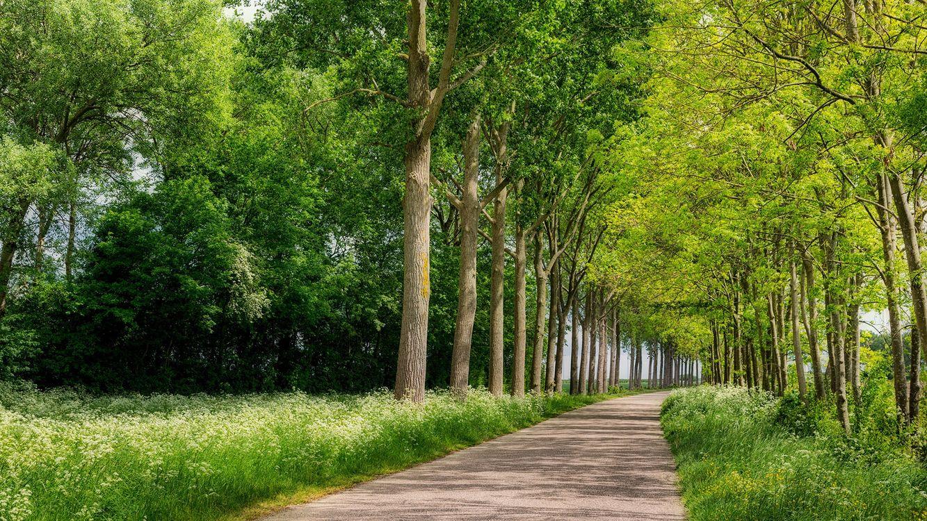 Фото бесплатно Южная Голландия, Нидерланды, деревья - на рабочий стол