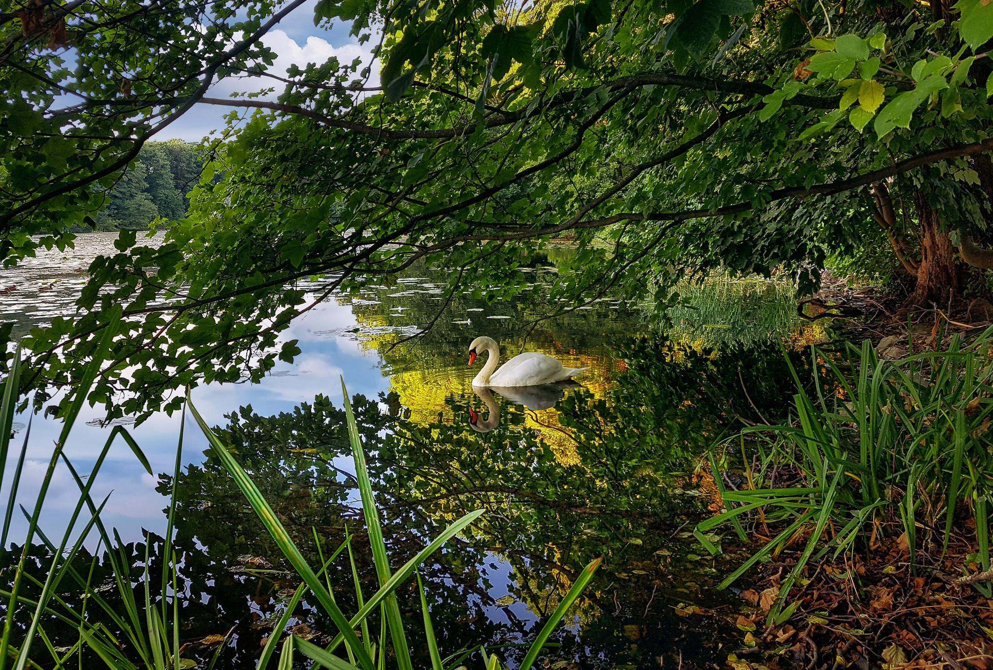 обои река, деревья, лебедь, природа картинки фото