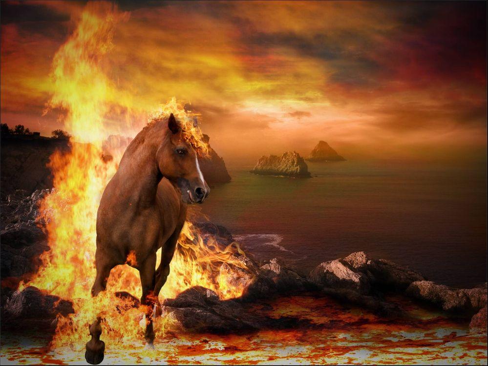 Обои закат, море, огонь, лошадь картинки на телефон