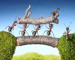 Бесплатные фото муравьи, насекомые, макро