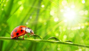 Photo free macro, insects, greens
