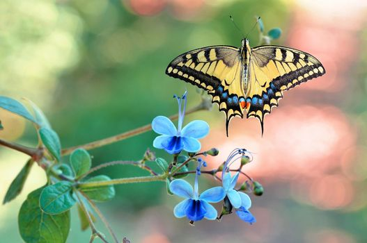 Photo free flower, butterfly wings, insects