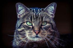 Старый полосатый кот