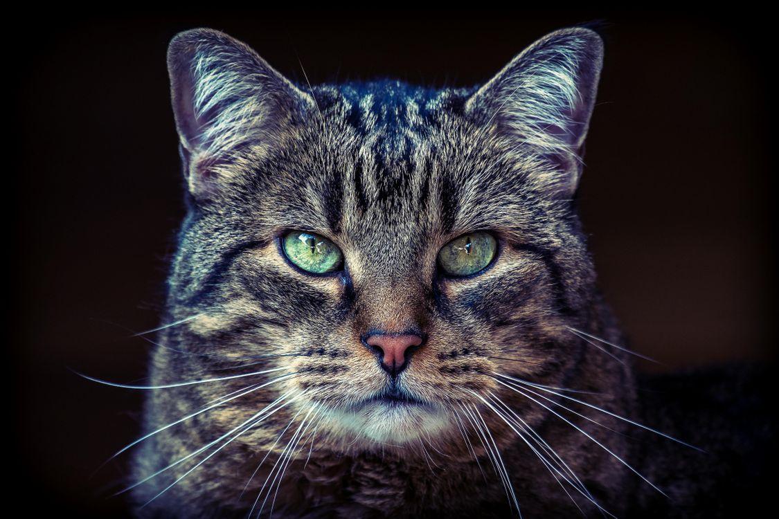 Старый полосатый кот · бесплатное фото