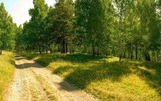 Фото бесплатно лесная дорога, колея, деревья