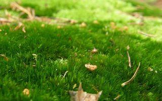 Бесплатные фото поляна,трава,зеленая,листья