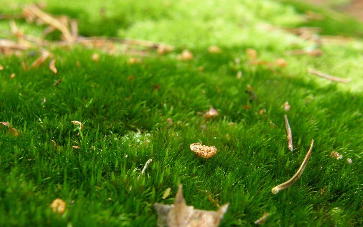 Фото бесплатно поляна, трава, зеленая, листья, природа