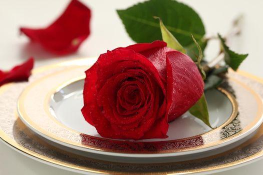 Картинка розы, цветок на рабочий стол