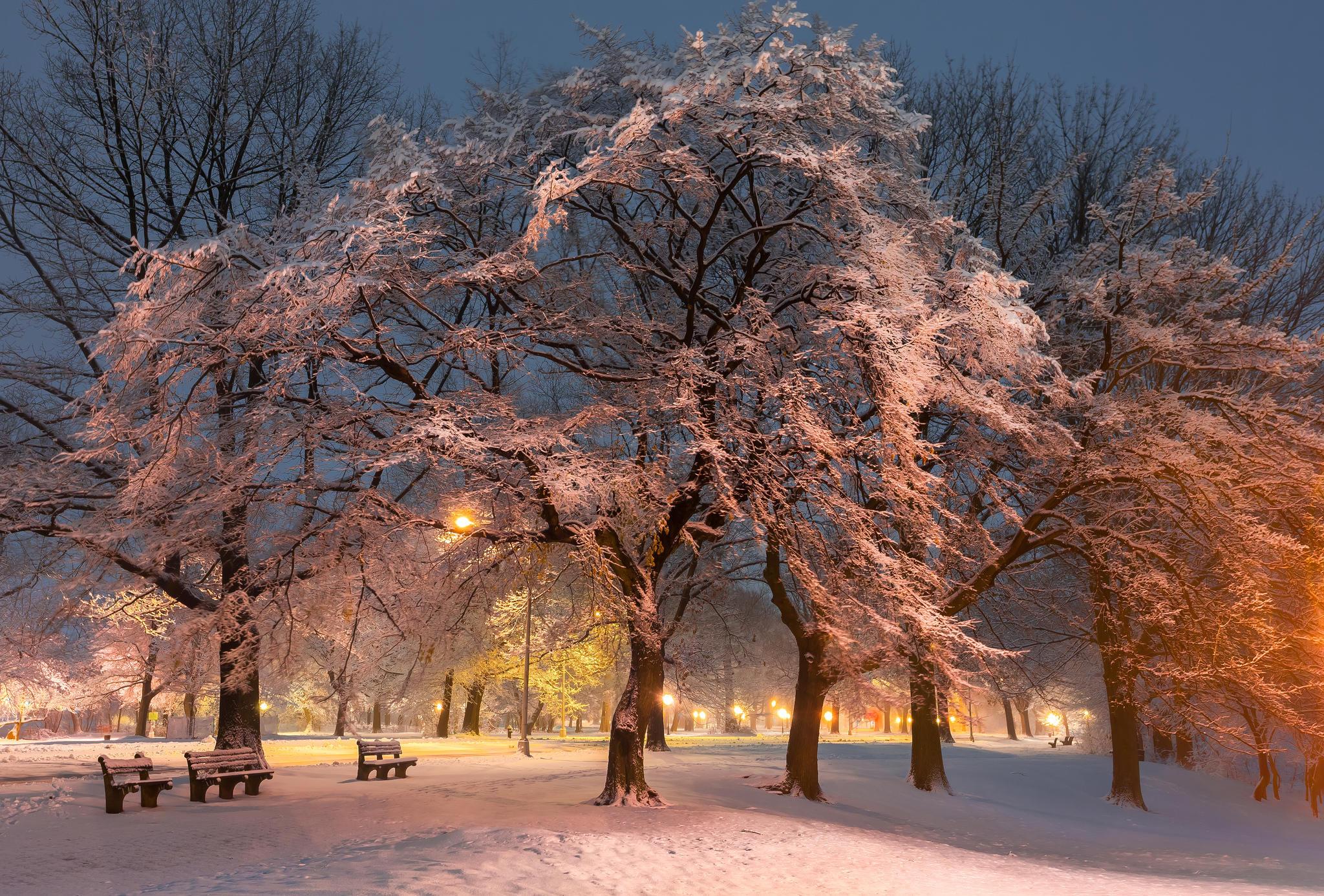 Обои зима, парк, дорога, лавочки