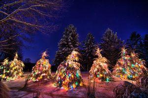 Фото бесплатно рождественские елки, зима, снег, сугробы, новогодние ёлки, деревья, ночь, пейзаж, новый год