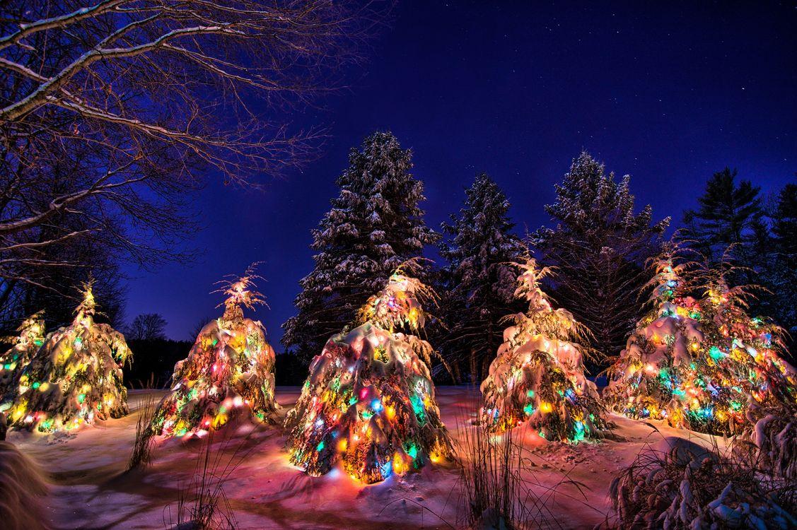Фото бесплатно рождественские елки, зима, снег, сугробы, новогодние ёлки, деревья, ночь, пейзаж, новый год, новый год