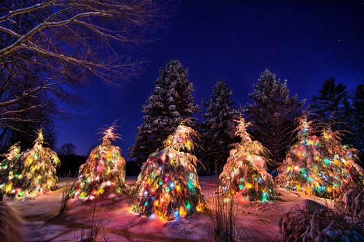 рождественские елки, зима, снег, сугробы, новогодние ёлки