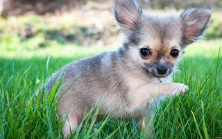 Бесплатные фото щенок,морда,глаза,лапы,шерсть,трава