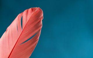 Фото бесплатно перо, розовое, фон голубой