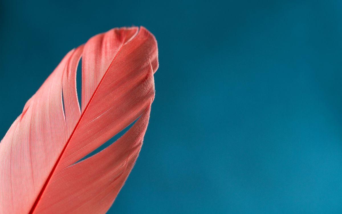 Фото бесплатно перо, розовое, фон голубой - на рабочий стол