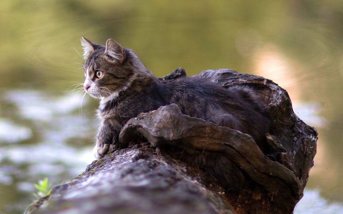 Фото бесплатно кошка, морда, глаза, взгляд, шерсть, бревно, кошки
