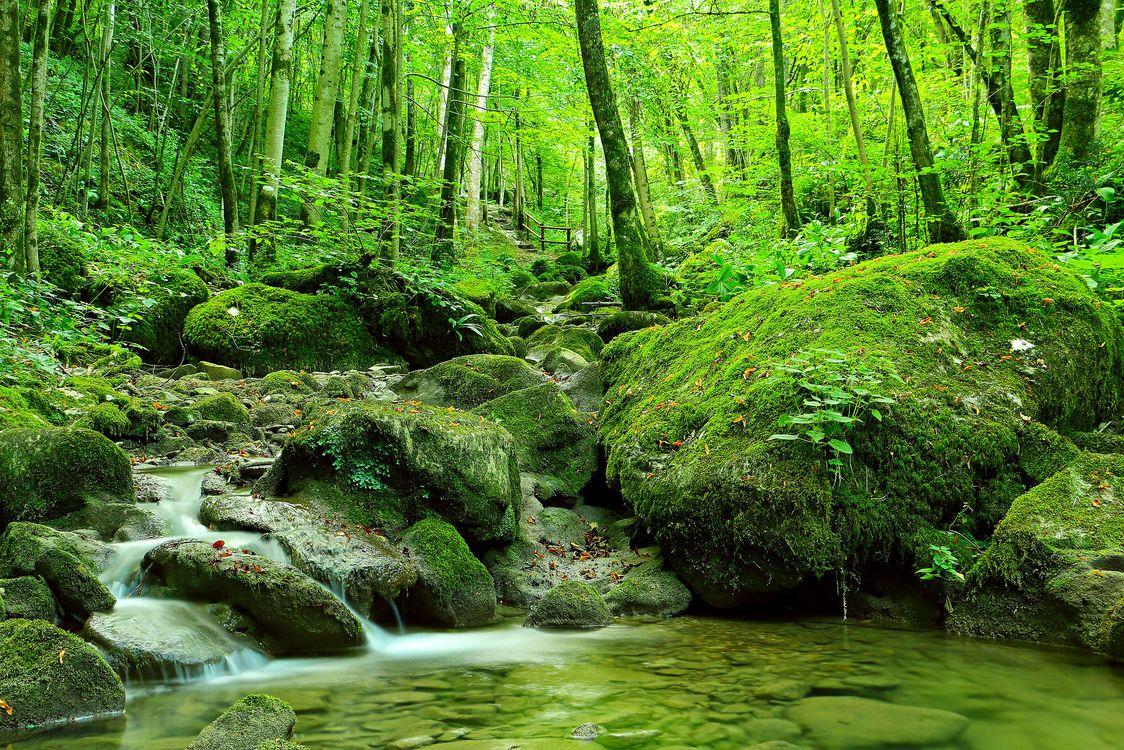 Фото бесплатно лес, деревья, камни - на рабочий стол