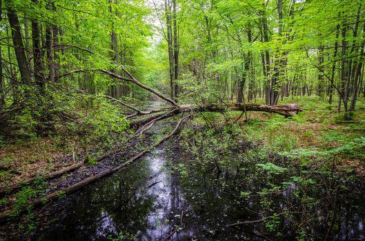Фото галерея лес, природа