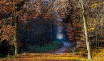 Заставки осень, дорога, деревья, пейзаж