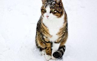 Бесплатные фото кот в снегу