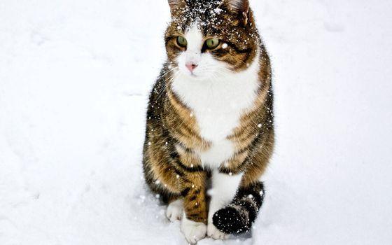 Фото бесплатно кот в снегу, снежинки, сугробы