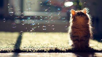 Бесплатные фото котенок,морда,лапы,шерсть,пузыри мыльные