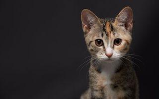 Фото бесплатно котенок, цветной, морда