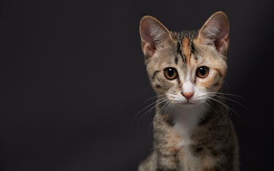 Бесплатные фото котенок,цветной,морда,глаза,усы,шерсть