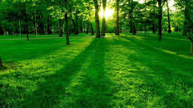 Фото бесплатно парк, трава, газон