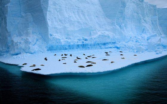 Фото бесплатно север, море, айсберг