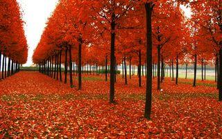 Фото бесплатно аллея, деревья, стволы