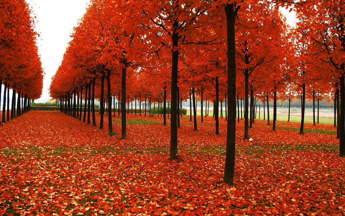 Фото бесплатно аллея, деревья, стволы - на рабочий стол