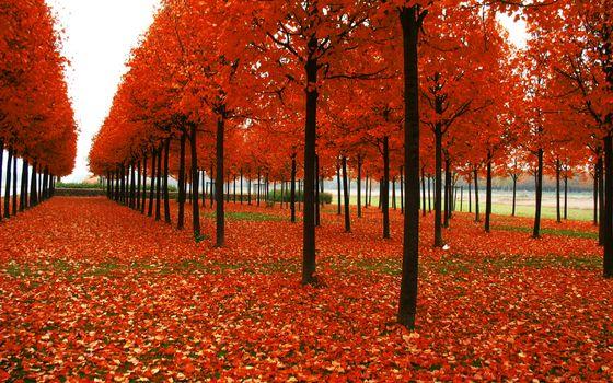 Бесплатные фото аллея,деревья,стволы,кроны,листва,красная