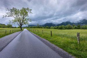 Фото бесплатно Большой дымный национальный парк, дорога, дерево