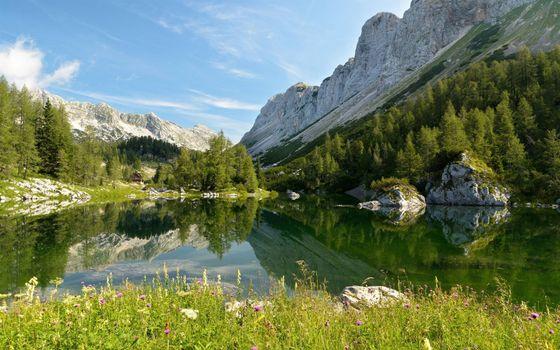 Бесплатные фото озеро,горы,деревья,лето