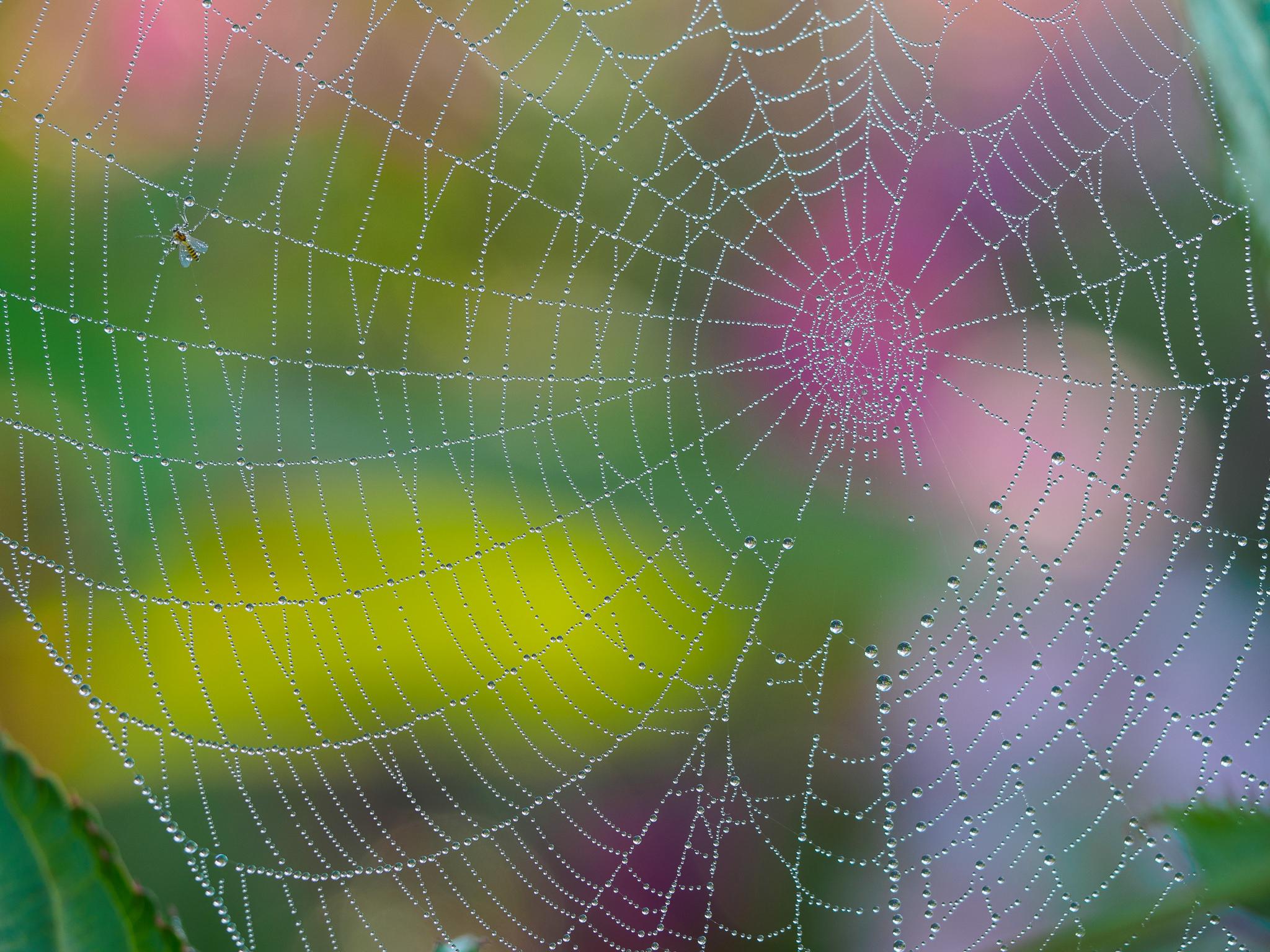 обои паутина, капли, макро картинки фото