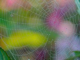 Бесплатные фото паутина,капли,макро
